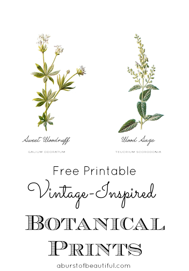 A Burst of Beautiful - Free Vintage Botanical Printable