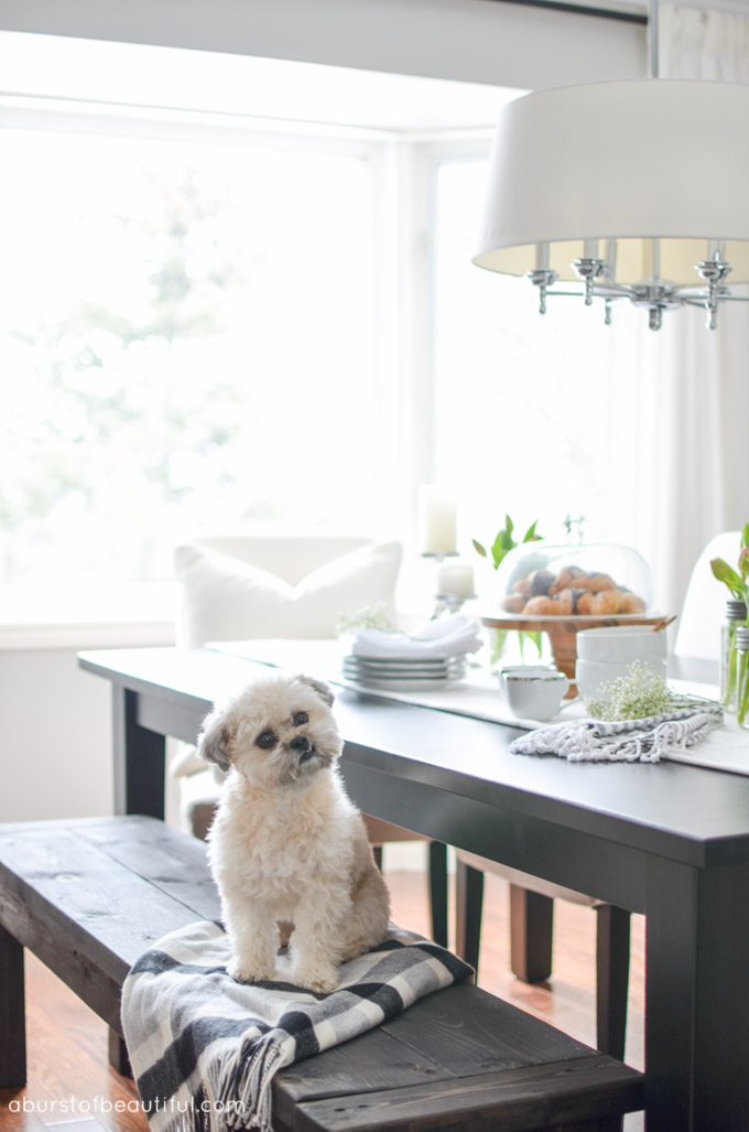 Bright and Neutral Living Room & Dining Room - A Burst of Beautiful