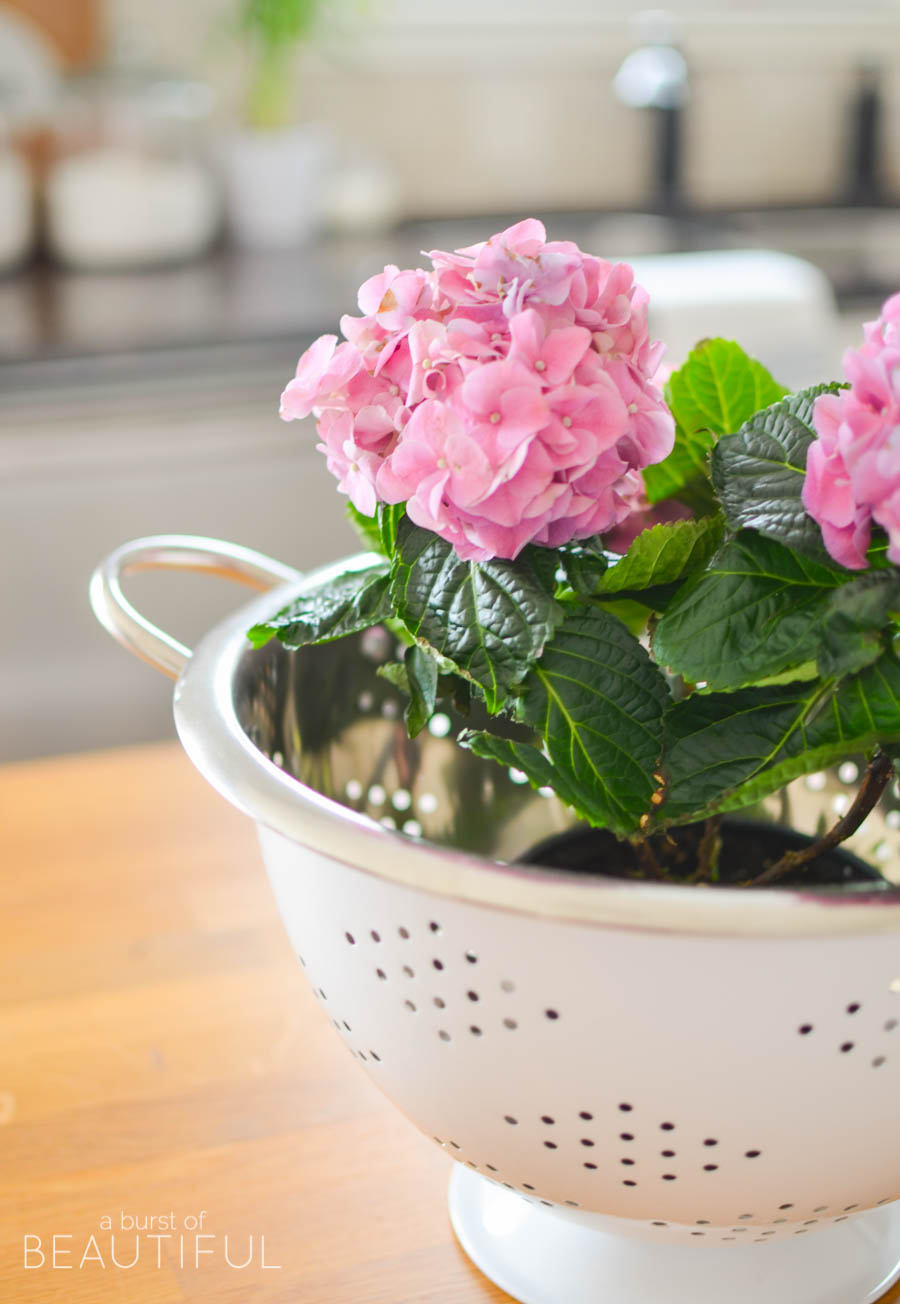 Spring flowers, like potted hydrangeas and daffodils and simple arrangements of tulips, are a pretty and inexpensive way to welcome spring into your home. Tour this bright and cheerful modern farmhouse, along with 16 other beautiful blogger homes in this stunning spring home tour   A Burst of Beautiful