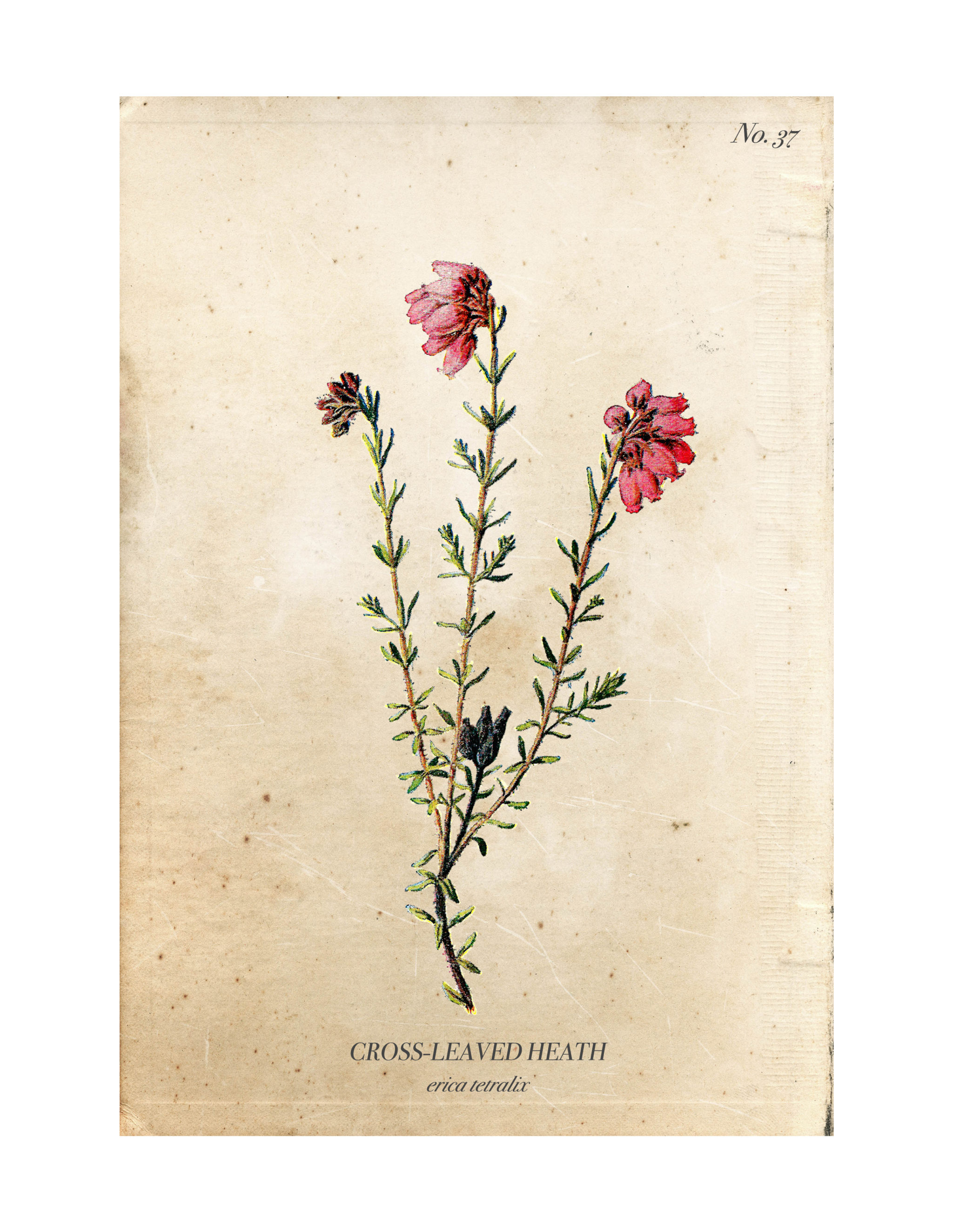 It is a picture of Sweet Printable Botanical Prints