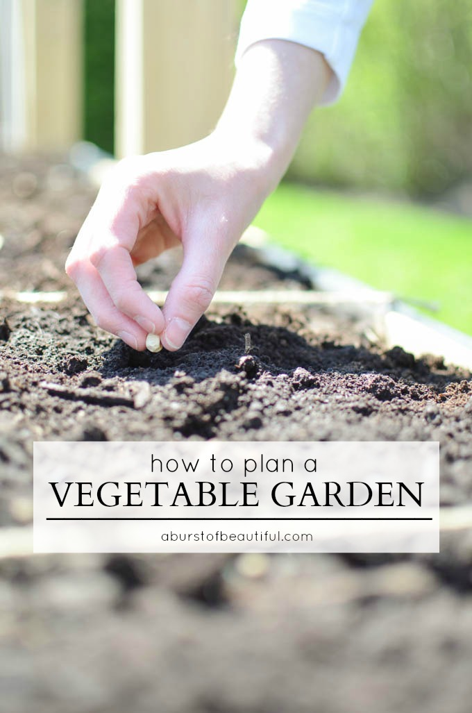 Learn how to plan and build your own raised vegetable garden with this detailed and comprehensive guide to gardening | A Burst of Beautiful
