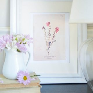 Vintage Wild Flower Botanical Prints