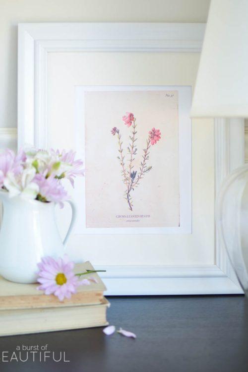 Vintage Wild Flower Botanical Prints