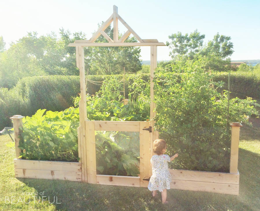 Square Foot Gardening Tips For The Beginner