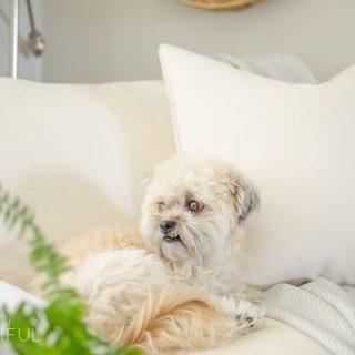 Why We Chose a White Slipcovered Sofa